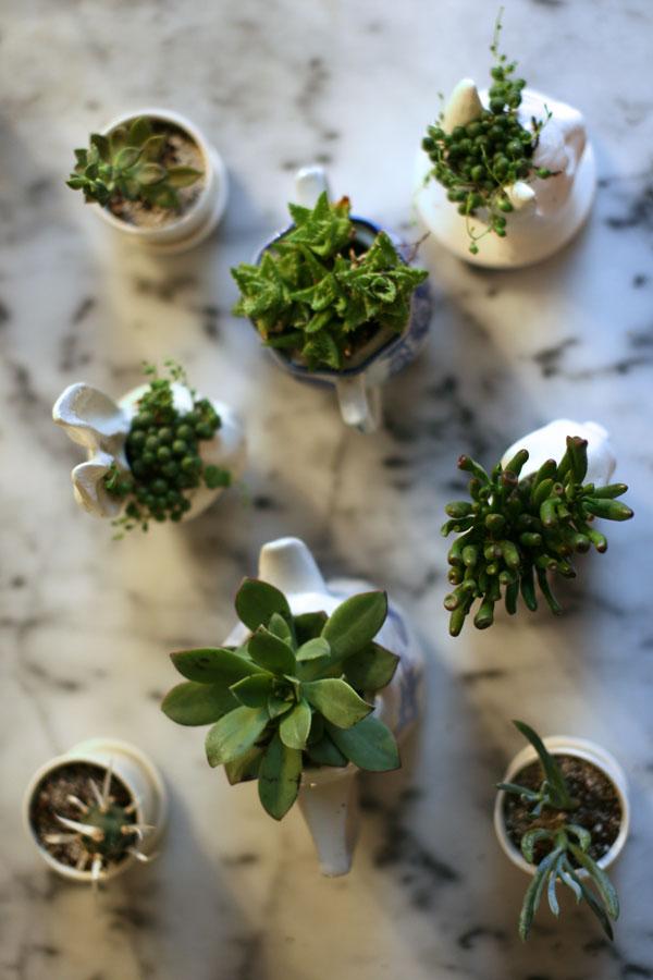 Succulents-1