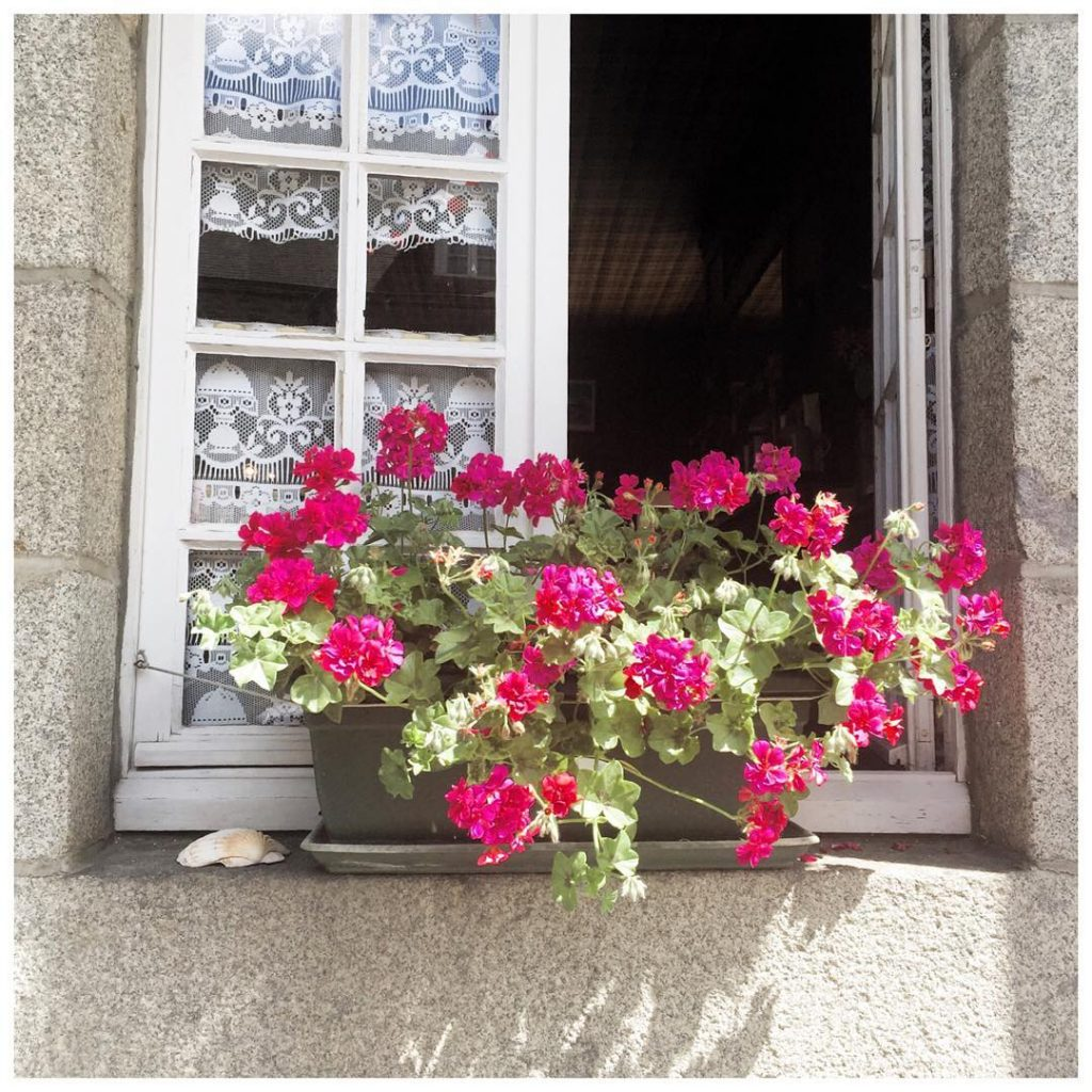the prettiest little window box I ever did see Lovehellip