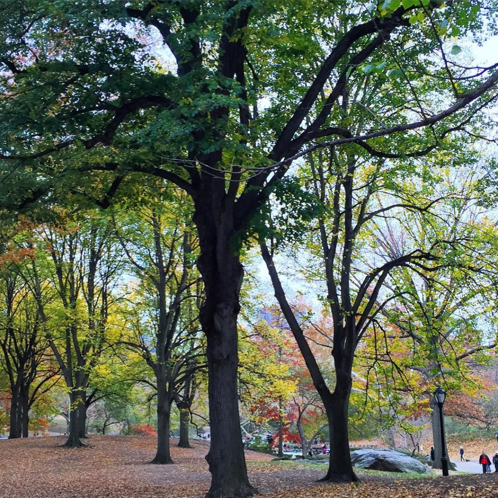 theres no place quite like Central Park in the fallhellip