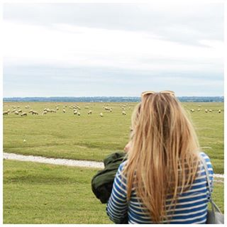 Jussssst watching the sheep  ecocult discoversaintjames showyourstripes stripetravels