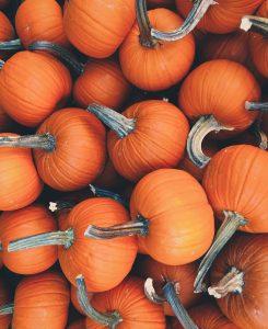 Fall Pumpkins // Weekend Reading 11.29.16 - The Stripe Blog