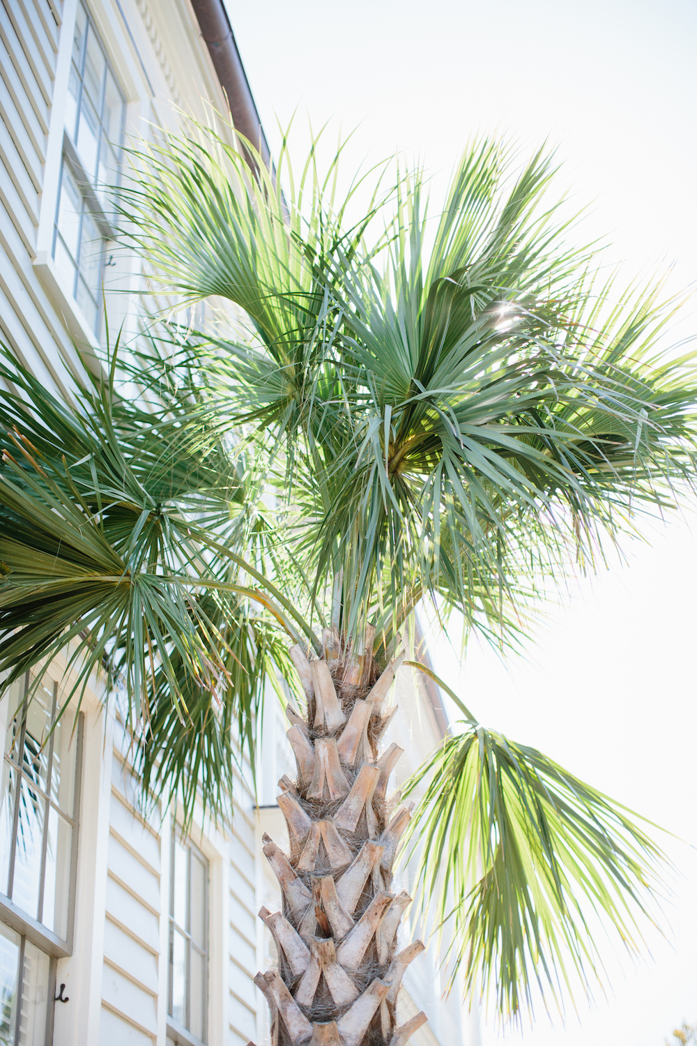 palm trees. grace atwood, the stripe | shot at 86 cannon in charleston