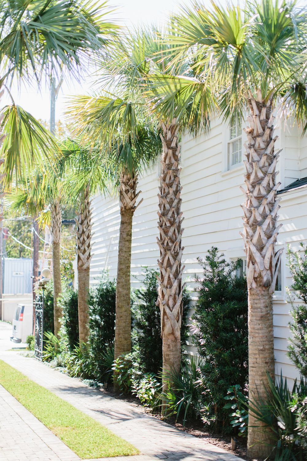 palm trees in charleston. grace atwood, the stripe | shot at 86 cannon