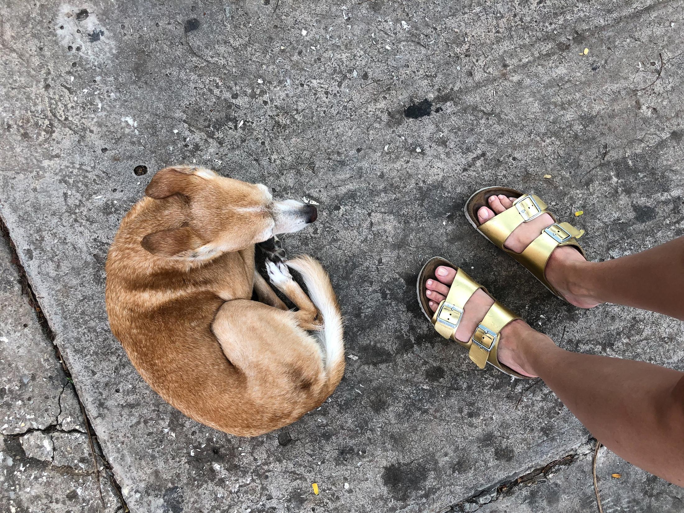cuba photo diary dog