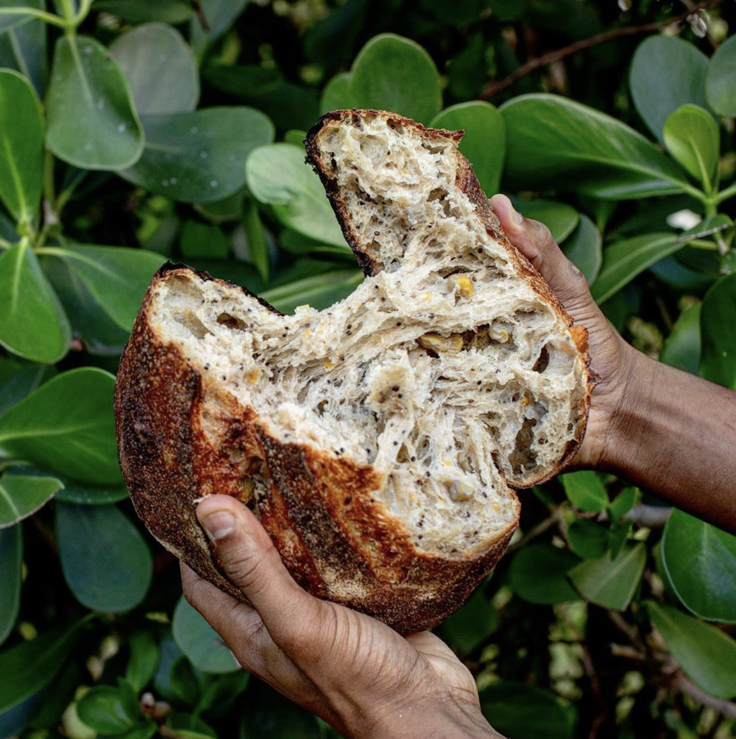 Bryan Ford, aka @artisanbryan bread
