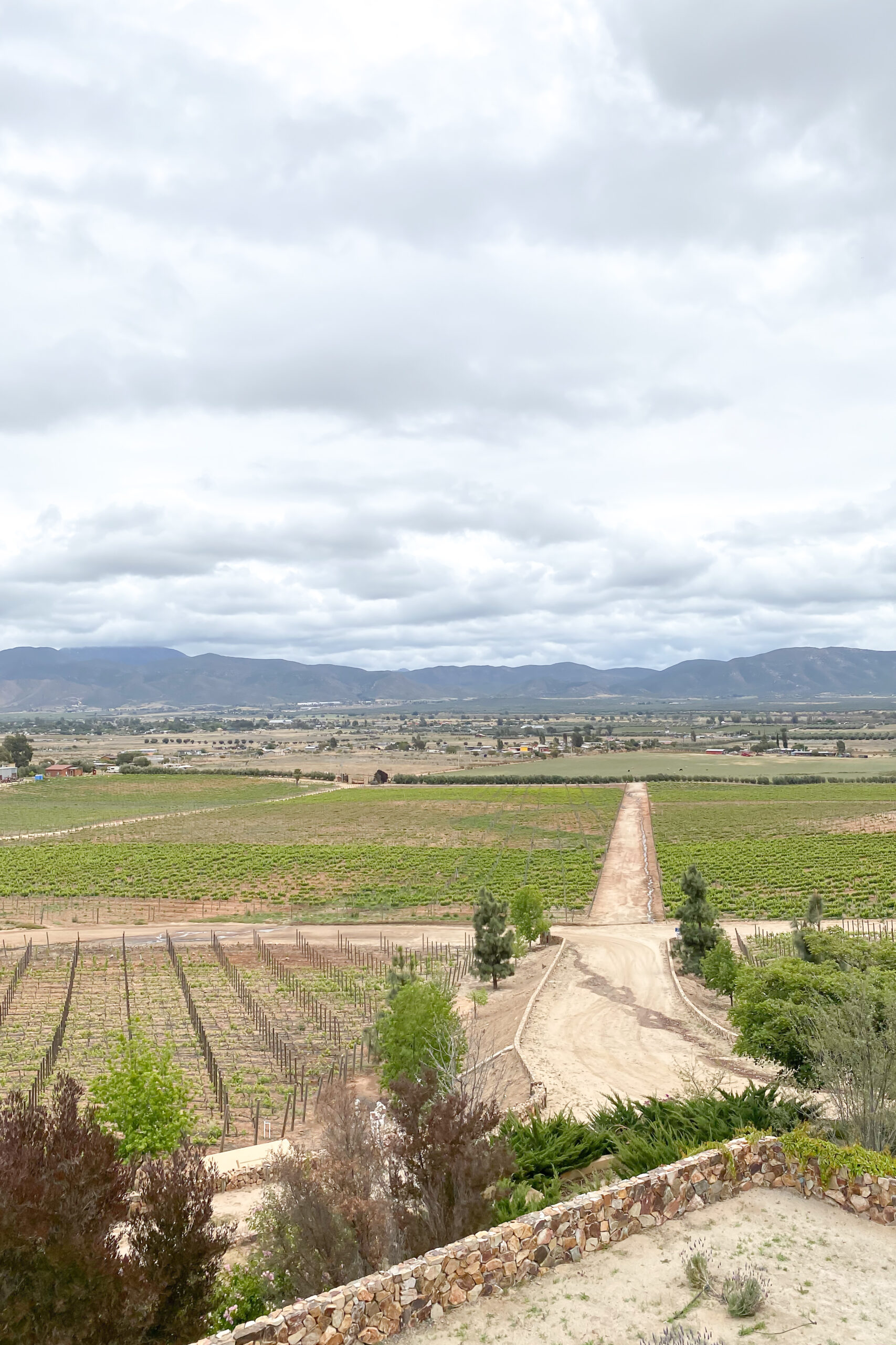 Wine tasting experience in Valle de Guadalupe